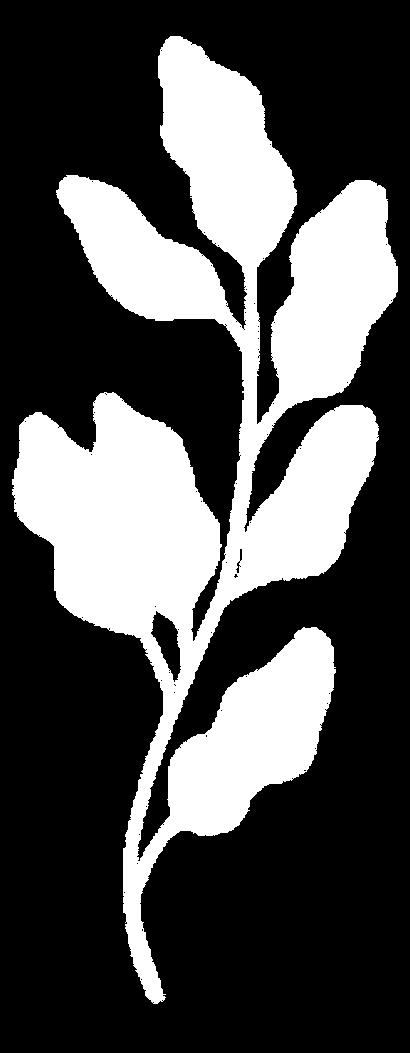 plante_01b.png