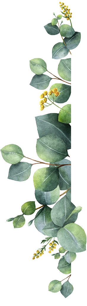 plante_05g.png
