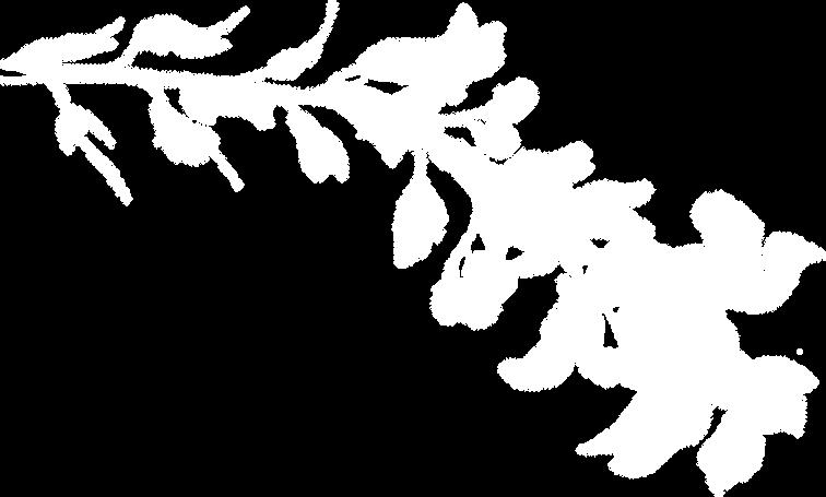 plante_02.png
