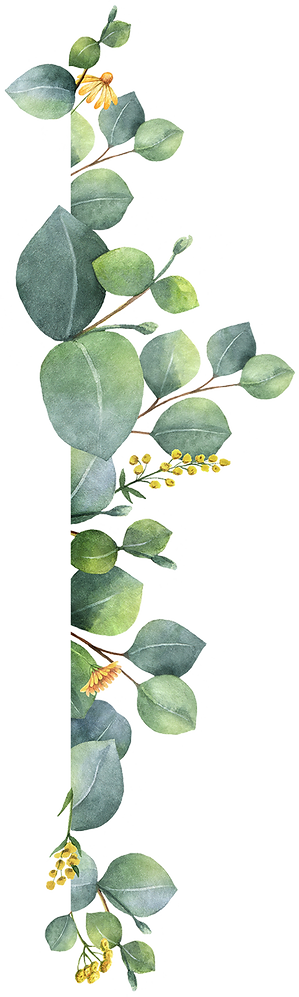 plante_05d.png