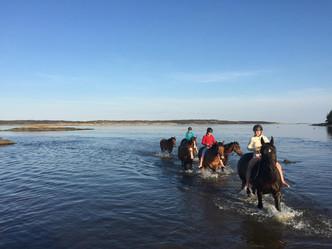 Hest i vanntrening