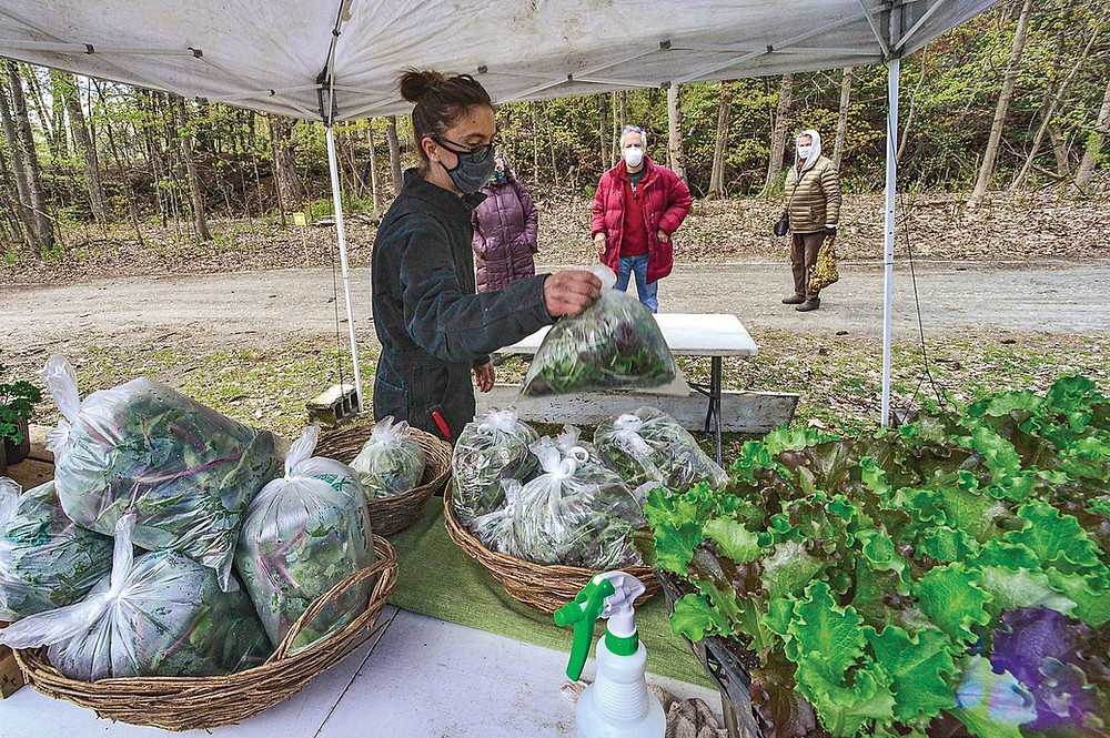 Emily Amanna, of Wild Shepard Farm, grabs a bag of greens mix for a customer at the Brattleboro Area Farmers' Market, in Brattleboro, Vt., as the market opens for the first time on Saturday, May 9, 2020, since the COVID-19 pandemic. KRISTOPHER RADDER - BRATTLEBORO REFORMER