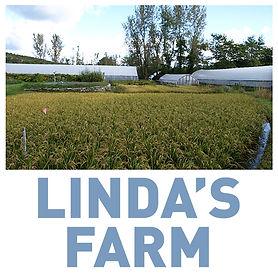Linda's Farm