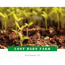 Lost Barn Farm
