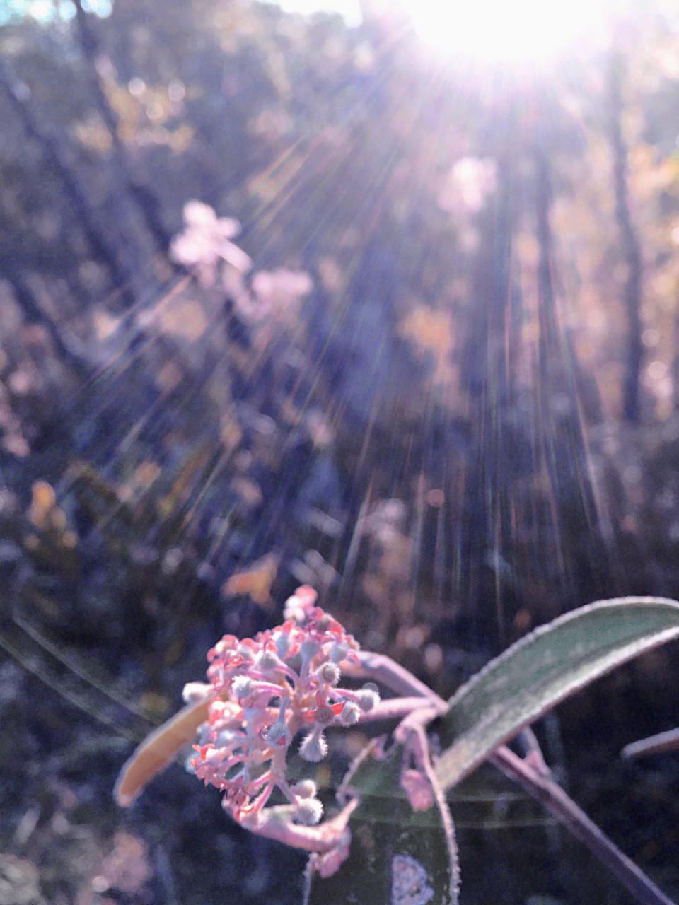 tania rollond_sunflower_2019.jpg