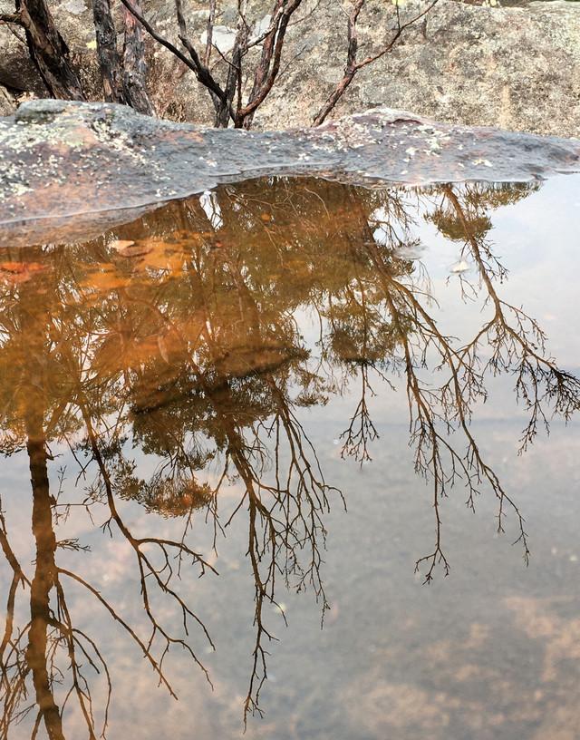 tania rollond_waterhole_2020.jpg