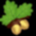 acorn-oak.png