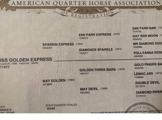 Miss Golden Express