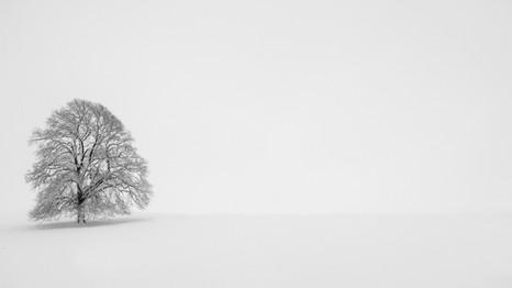 Snow Tree BW copy.jpg