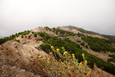 Les hauteurs de l'île battues par les vents où l'on trouve un brouillard quasi-permanent.