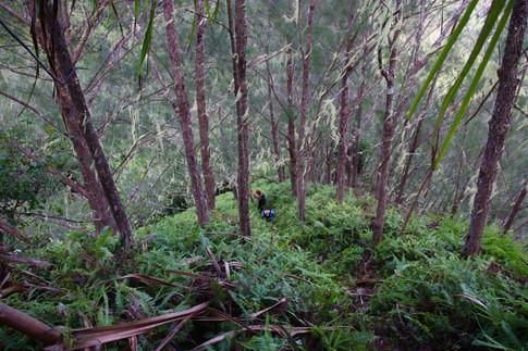 La redescente dans la jungle, entre les pins, les pandanus et les fougères arborescentes est assez périlleuse, mais elle vaut le coup ! Heureusement que Motu sait où l'on va...