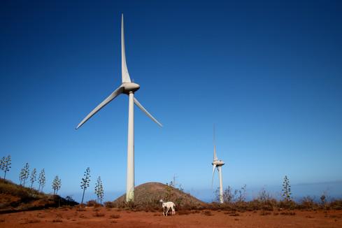 Les éoliennes de la centrale hydroélectrique de Gorona del Viento.