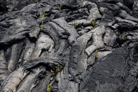 Formes fascinantes des anciennes coulées de lave du Kilauea.