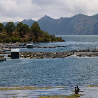 Le lac du Mont Batur.  Les habitants, qui sont les plus pauvres de l'île, y font de l'aquaculture. Les sols volcaniques sont très fertiles. Cette région exporte les produits de l'agriculture jusque dans les grandes villes au Sud de Bali.