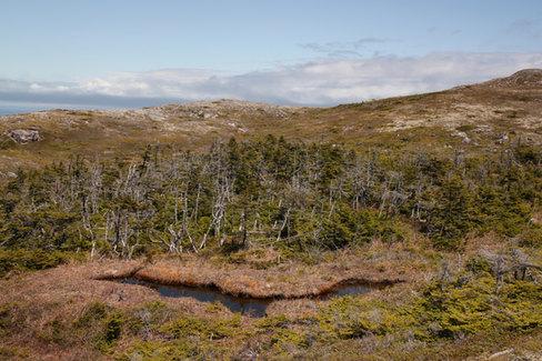 Sur les hauts plateaux de Langlade, dans les tourbières.