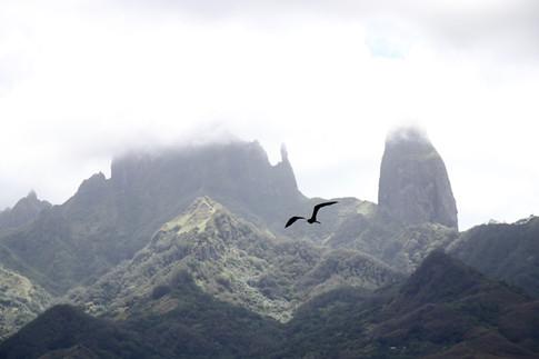 Nous nous trouvons dans la vallée principale, à Hakahau. Lorsque le ciel est dégagé, nous pouvons jouir d'une très belle vue sur les pics.  À cet instant, les nuages restent accrochés et les ombres jouent avec la lumière.   Une frégate passe. Elle se dirige vers l'océan. Là-bas, elle tentera de voler le poisson dans le bec d'autres oiseaux marins. Elle ne peut pas mouiller ses plumes, car elle ne possède pas l'attirail génétique pour les faire sécher. Elle a donc appris à être maline...