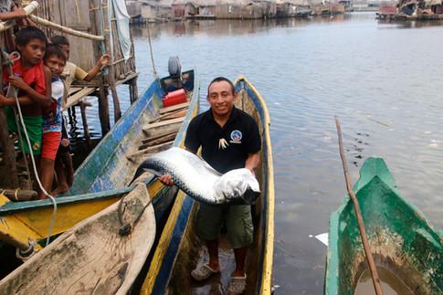 Les Kuna sont également des pêcheurs, mais les poissons se font plus rares dans les environs de l'île d'Ustupo, à cause de pratiques de pêche destructrices des récifs coralliens dans les années 70-80 (dynamite, chlore). Aujourd'hui, il faut aller pêcher loin des îles habitées. Ici, un pêcheur a eu de la chance, il est revenu avec un très gros poisson.