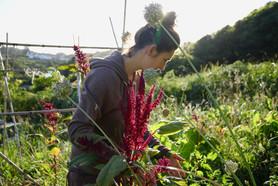 A. récolte des légumes, des fleurs et des feuilles dans son potager en permaculture.