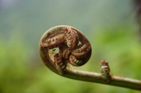 Végétation luxuriante et diverse au coeur de la jungle au pied de Poumaka.