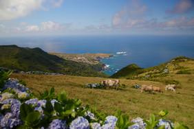 Les villages florentins sont répartis tout autour de l'île. La forêt originelle a été défrichée pour pouvoir faire paître le bétail. Les Açores produisent aujourd'hui 25% du lait consommé au Portugal!