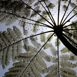 Au coeur de la forêt tropicale des environs de Munduk.