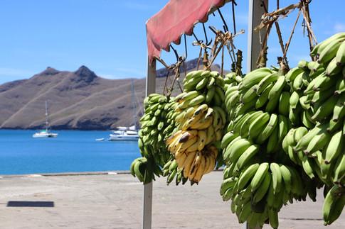 Sur le quai de Nuku Hiva, sont attachés les régimes de bananes. Nous tentons de trouver un endroit où dormir pour les deux nuits que nous avons à passer sur l'île.