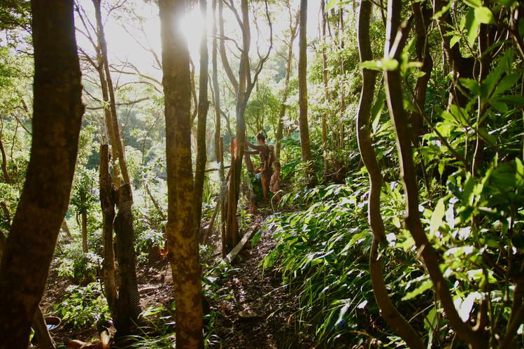 A. donne des déchets verts à manger à ses poules. Le poulailler a été construit parmi les arbres, dans la forêt.