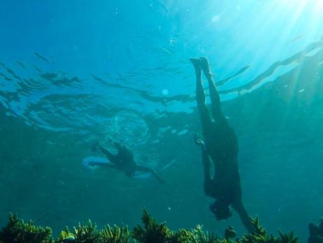 Les gardiens des coraux
