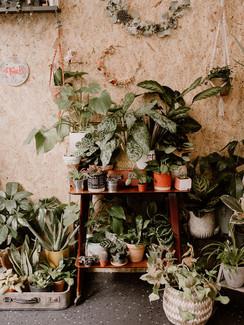 les plantes intérieures