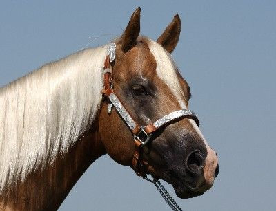 Fire Sixes Quarter Horse Stallion