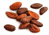CacaoGrains.jpg