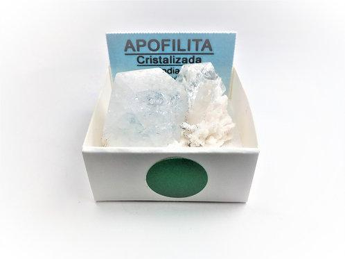 4X4 Apofilita India