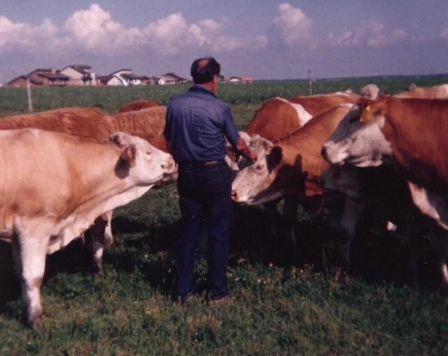 Talking to his cattle
