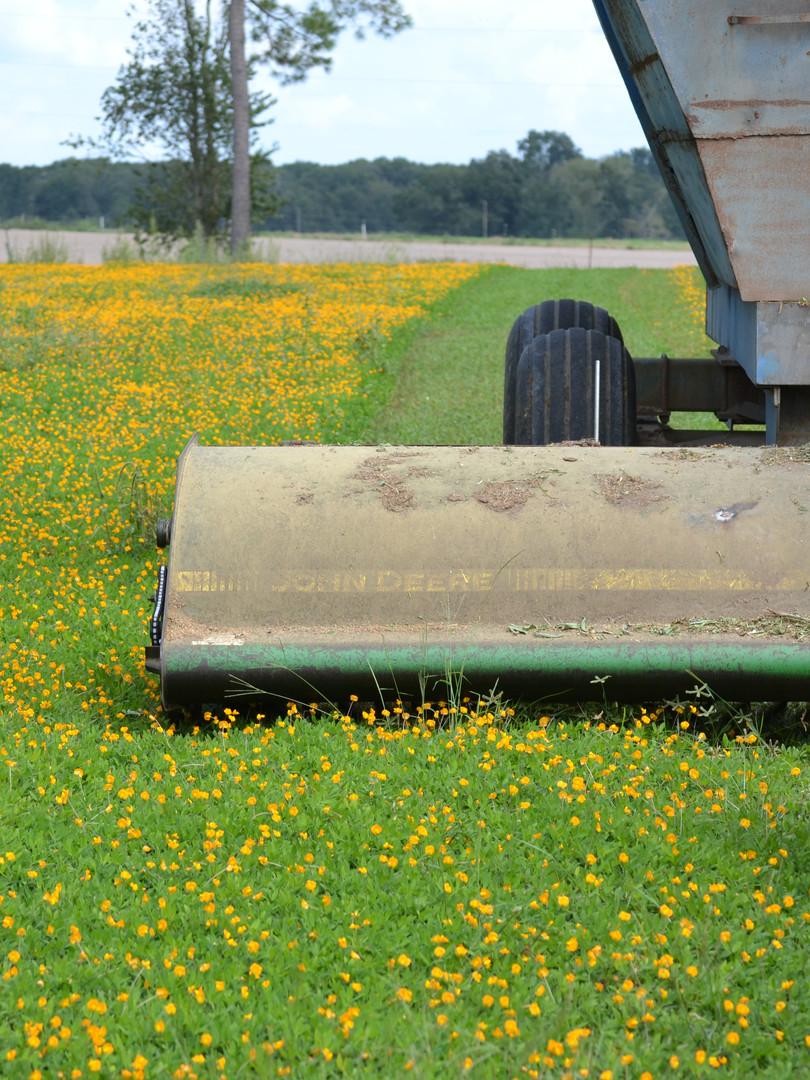 perrenial peanut cut tractor.JPG