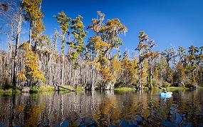 Swamp.jpeg