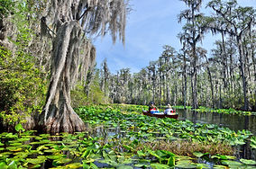 Lily-pads-Okefenokee-Swamp-Georgia.jpg