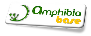 Amphibia. Bamboo, bio-based, architecture and structural engineering