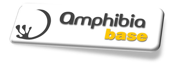 Amphibia Bamboo, Architecture & Structural Engineering