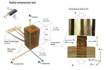 RAdial compression test.jpg