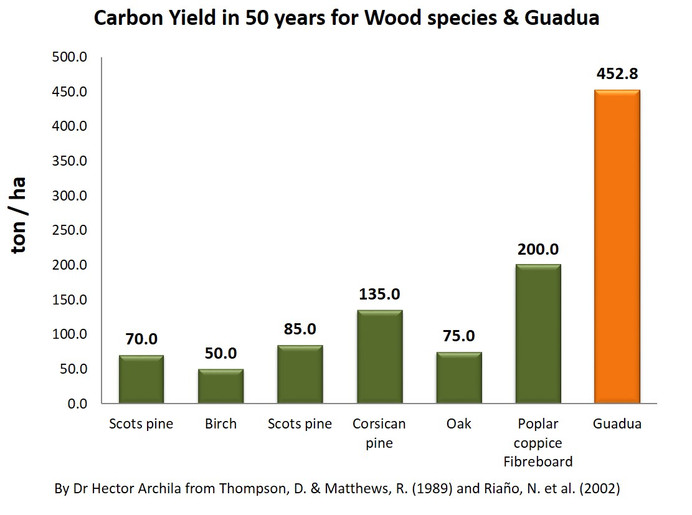 Carbon yield in 50 years for wood species and bamboo-Guadua.jpg