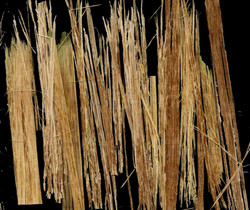 Fibre-extraction manufacturing process c.jpg