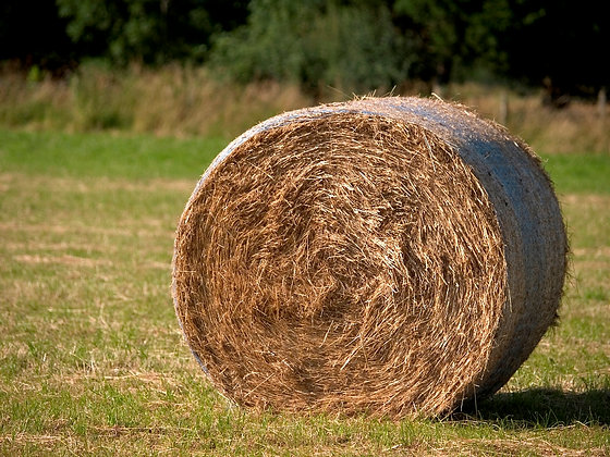 Rollo de alfalfa