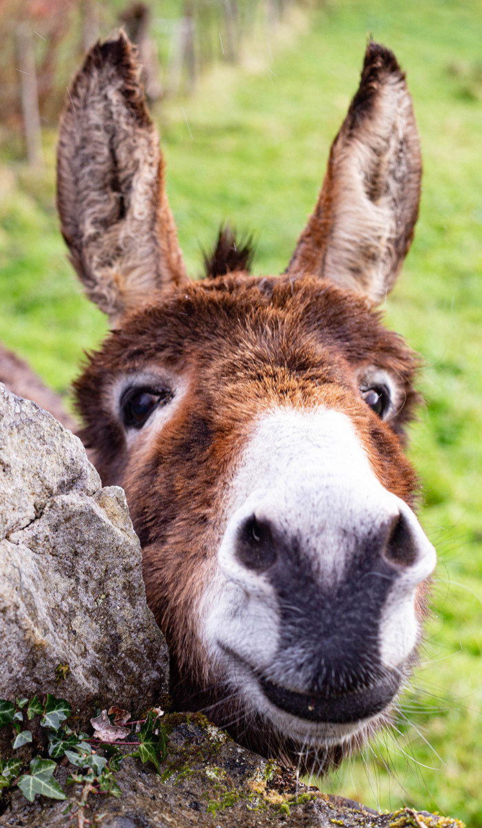 PDI - Happy Donkey by Brenda Taylor (6 marks)
