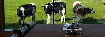 vrij en weids uitzicht op de weilanden en de koeien
