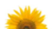 Junecom_Sunflower_Services.png