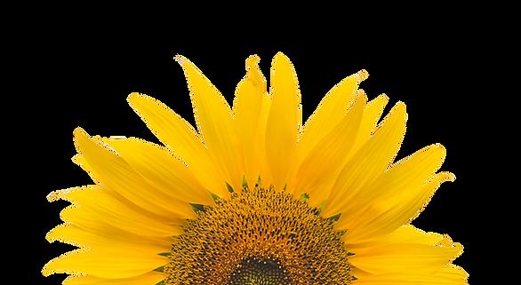 Junecom_Sunflower_Services.png
