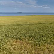 edge of Crail, looking towards may island