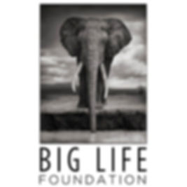 The Big Life Foundation logo