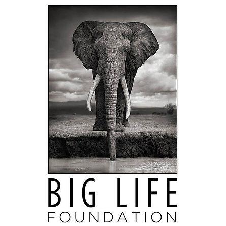 The Big Life Foundation logo