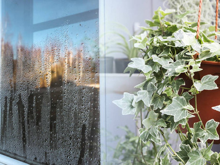 Las mejores plantas para absorber la humedad dentro de tu empresa u hogar.
